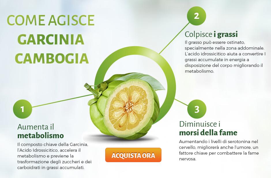 garcinia frutto