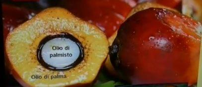 olio-di-palma-2