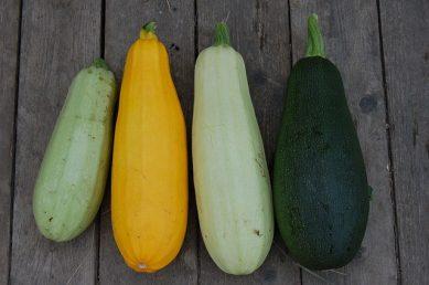 zucchine varietà