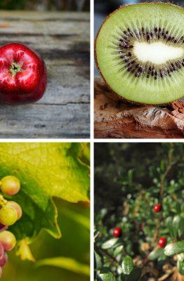 frutti autunnali elenco proprietà ricette