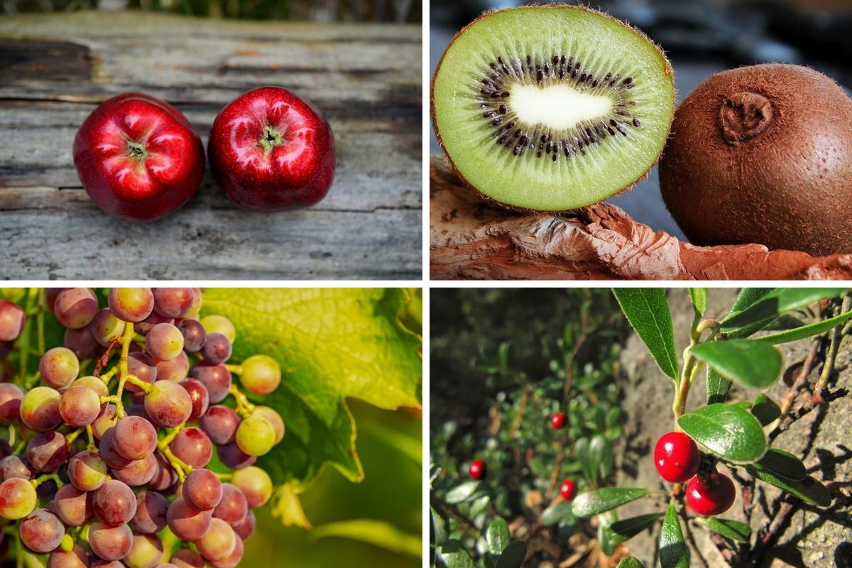 Frutti autunnali elenco propriet e ricette le ricette di ciaofood - Elenco utensili da cucina ...